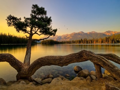 Lakeside Tree Screensaver